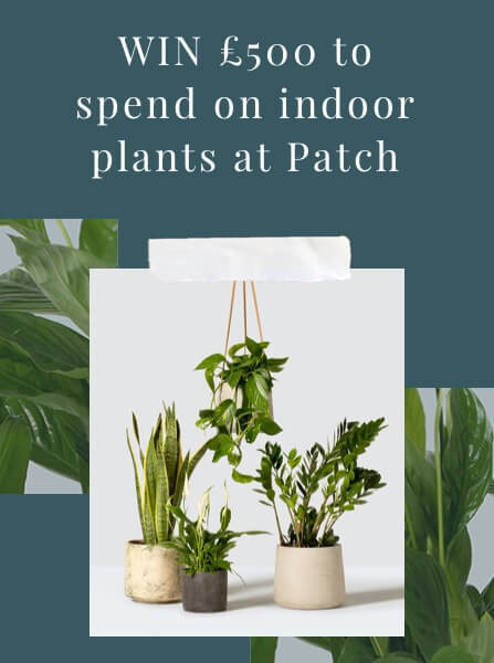 Patch Plants Competition